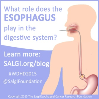world digestive day 2015 salgi esophageal cancer research foundation what role esophagus play digestive system